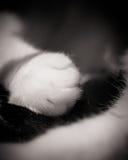 在黑尾巴的白色猫的爪子 免版税库存图片