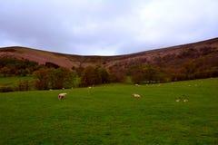 在黑山,布雷肯比肯斯山国家公园,威尔士,英国附近的绿色农村小山 免版税库存图片