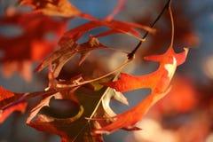 在Â布鲁克林的秋天 美妙金黄和桔子在一个晴天离开 图库摄影