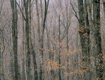 在水平的亚当斯山的航空公司足迹,总统范围,白色山国家森林,新罕布什尔 免版税库存图片