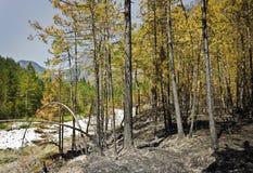在水平的木头的之后火 免版税库存照片
