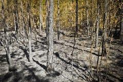 在水平的木头的灰 免版税图库摄影