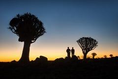 在2018年1月采取的南纳米比亚颤抖树森林 库存图片