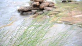 在水库附近的草 影视素材