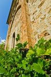 在13建立的Raca修道院附近墙壁的藤 世纪 免版税库存图片
