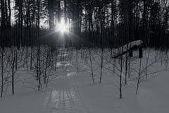 在离开森林 免版税库存图片