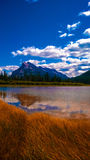 在水强湿地饱和的颜色的反射 库存图片