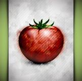 蕃茄水彩 库存照片