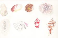 在水彩的贝壳汇集 免版税库存图片