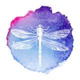 在水彩背景的手拉的蜻蜓 库存图片