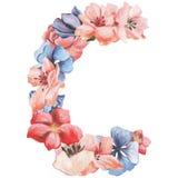 在水彩花,被隔绝手拉在白色背景,婚姻的设计上写字,英语字母表C  免版税图库摄影