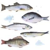 在水彩绘的套5条鱼 向量例证