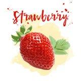 在水彩画的草莓 传染媒介EPS 10 免版税库存图片