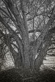 在阴影的树桩 免版税库存照片