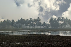 在死水或沼泽的有雾的早晨在密林 库存照片