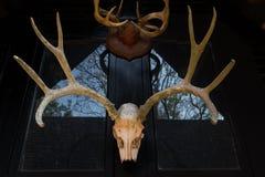 在黑房子墙壁上的鹿角  免版税库存图片