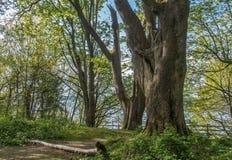 在破折号点的树 免版税库存图片