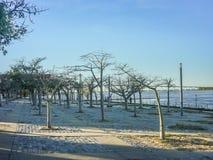 在巴拉那河的海岸在罗萨里奥,阿根廷 免版税库存图片