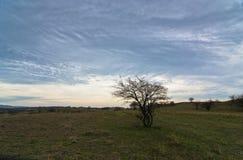 在围拢的大草原道路的黑暗的云彩小小山沙丘和罕见的植被 库存图片