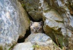 在洞掩藏的猫 库存图片