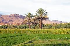 绿洲在从摩洛哥的沙漠 免版税库存照片