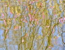 在绽放反射的树在水 库存图片