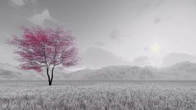 在绽放慢动作4K的佐仓樱桃树 库存例证