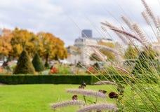 在巴黎放牧花城市公园在城市的背景的一个晴天 库存图片