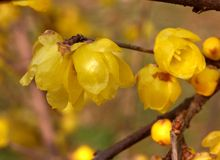在绽放的十二朵花 免版税库存图片