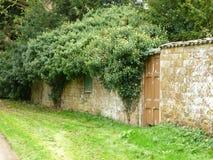 在绽放的常春藤在古老墙壁上茂盛 免版税库存图片