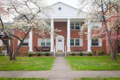 在绽放的春天树在一个大砖公寓前面 库存图片