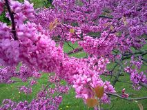 在绽放的春天花 库存照片