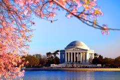 在绽放的杰斐逊纪念和桃红色樱桃树 免版税库存照片