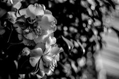 在绽放的花 库存照片