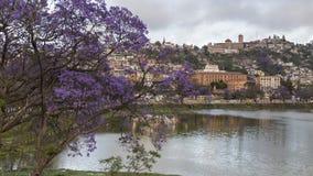 在绽放的紫色兰花楹属植物树在紫胶阿诺西区,安塔那那利佛 免版税库存照片