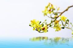 在绽放的黄色花 库存照片
