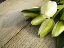在绽放的黄色郁金香花 库存照片