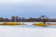 在维斯瓦河的嘴附近环境美化到波罗的海,波兰 免版税图库摄影