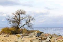 在维斯瓦河的嘴附近环境美化到波罗的海,波兰 免版税库存照片