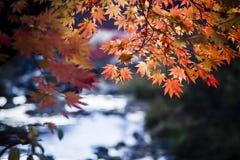 在水旁边的秋叶 图库摄影