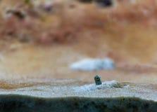 在水族馆坦克的庭院鳗鱼 免版税图库摄影