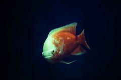在水族馆的一条鱼 免版税库存照片