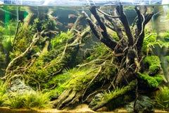 在水族馆的吉恩生长珊瑚 图库摄影