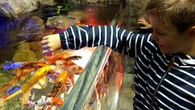 在水族馆的哺养的鱼 影视素材