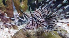 在水族馆的奇怪的鱼 免版税库存照片