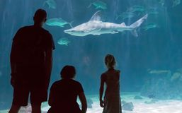 在水族馆的家庭观看的鲨鱼 免版税库存照片