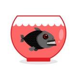 在水族馆的比拉鱼 危险家庭海生物 狂放的掠食性动物 免版税库存照片