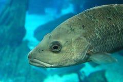 在水族馆的鱼 免版税库存照片