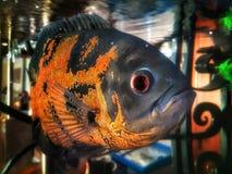 在水族馆的鱼 图库摄影