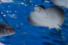 在水族馆的鱼 免版税图库摄影